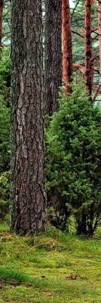 Las drzewa